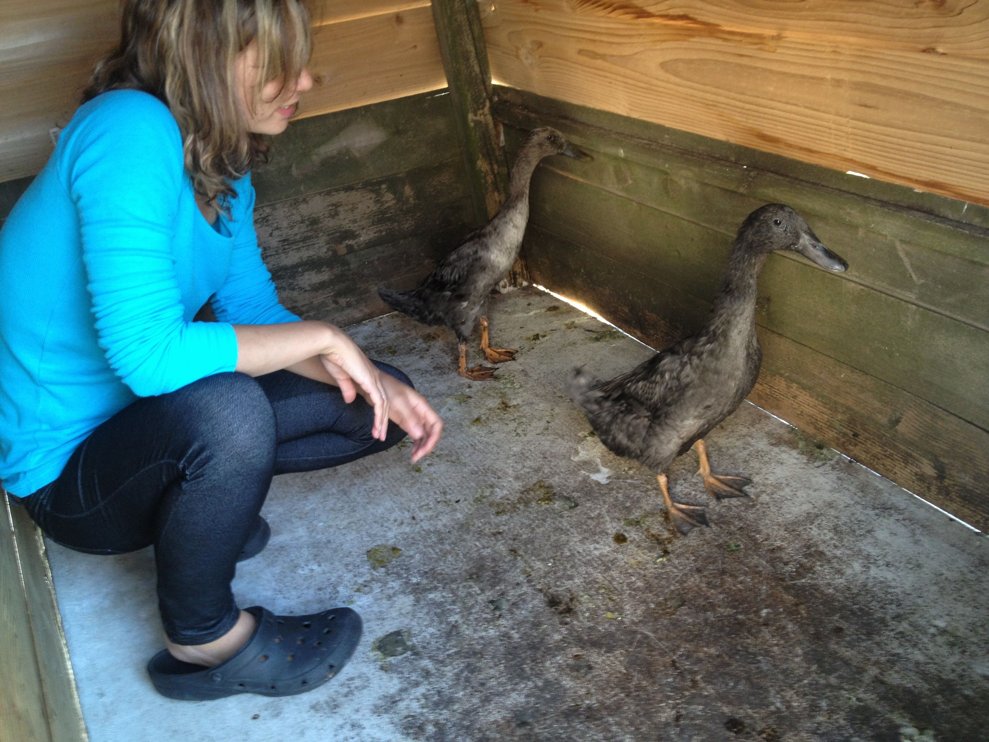 Building a duck house backyard ducks - Make a house a home ...