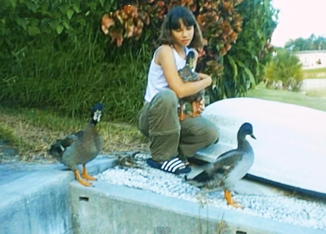 stories backyard ducks